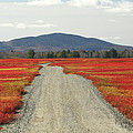 Road Through Autumn Blueberry Maine Poster by Scott Leslie