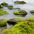 Rocks or boulders covered with green seaweed bading in misty sea  Poster by Dirk Ercken
