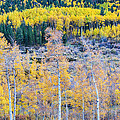 Rocky Mountain Autumn Contrast Print by James BO  Insogna