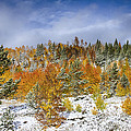 Rocky Mountain Autumn Storm Print by James BO  Insogna