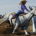 Rodeo Barrel Racer Poster by Bob Christopher