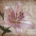 Romance lilith Print by Angela Doelling AD DESIGN Photo and PhotoArt