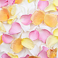Rose petals background Print by Elena Elisseeva