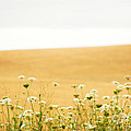 Run With Me Through a Field of Wild Flowers Print by Artist and Photographer Laura Wrede