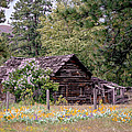 Rustic Cabin In The Mountains Poster by Athena Mckinzie
