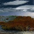 Salt Marsh at the Edge of the Sea Poster by RC DeWinter
