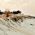 Sand Dunes at Penny Beach Print by Kim Bemis