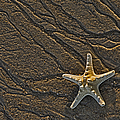 Sand Prints and Starfish  Print by Susan Candelario