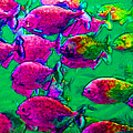 School of Piranha v2 Print by Wingsdomain Art and Photography