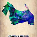 Scottish Terrier Poster Print by Irina  March