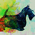 Scottish Terrier Watercolor Poster by Irina  March