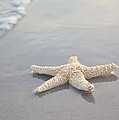sea star Print by Samantha Leonetti