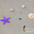 Sea Swag - Purple Poster by Al Powell Photography USA