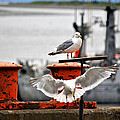 Seagulls Expression Print by Debra  Miller