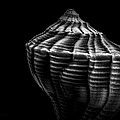 Seashell on Black Poster by Bob Orsillo