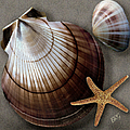 Seashells Spectacular No 38 Print by Ben and Raisa Gertsberg