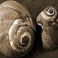 Seashells Spectacular No 6 Print by Ben and Raisa Gertsberg