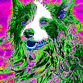 Sheep Dog 20130125v2 Poster by Wingsdomain Art and Photography