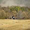 Sheep in the South Print by Jai Johnson