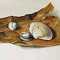 shells on paper Print by Horst Braun