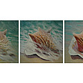 Shells Triptych Print by Don Young
