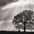 Shining Down Print by JC Findley