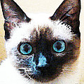 Siamese Cat Art - Black and Tan Poster by Sharon Cummings