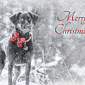 Sienna - Merry Christmas Poster by Lori Deiter