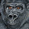 Silverback Print by Janis  Cornish