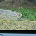 Six Flags Great Adventure - Animal Park - 121272 Print by DC Photographer