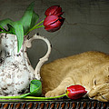 Sleepy Tulips Print by Diana Angstadt