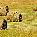 Smoky Mountain Hay Print by Frozen in Time Fine Art Photography