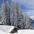 Snow covered trees and mountains in beautiful winter landscape Poster by Matthias Hauser