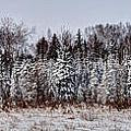 Snow Tree Line Poster by Gary Gish