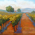 Sonoma Vineyard Poster by Carolyn Jarvis