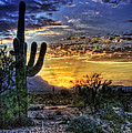 Sonoran Sunrise  Print by Saija  Lehtonen