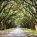 Southern Way Print by Carol Groenen