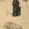 Spaniels, 1930, Illustrations Poster by Cecil Charles Windsor Aldin
