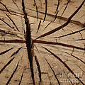 Split Wood Poster by Art Block Collections