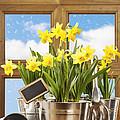 Spring Window Print by Amanda And Christopher Elwell