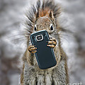 Squirrel With Cellphone Poster by Mike Agliolo
