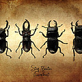 Stag Beetles Poster by Mark Rogan