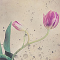 Stained tulip Print by Cristina-Velina Ion