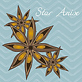 Star Anise Art Print by Christy Beckwith