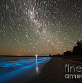 Star Trails And Bioluminescence Poster by Philip Hart