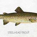 Steelhead Trout Poster by Aged Pixel