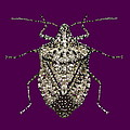 Stink Bug Bedazzled Poster by R  Allen Swezey