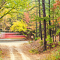 Stop - Beaver's Bend State Park - Highway 259 Broken Bow Oklahoma Print by Silvio Ligutti