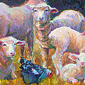 Stranger at the Well - spring lambs sheep and hen Print by Talya Johnson