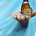 Striped Tiger Butterfly Print by Tim Gainey